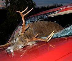 111031065207_deer_accident_road